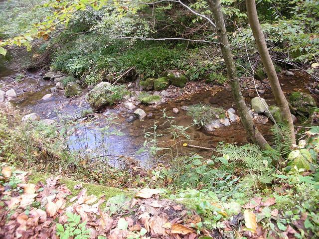 流れがあまり速くなく,水深も浅い場所がゴギの産卵床に適しているようだ.