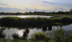 Landscape - RSPB reserves