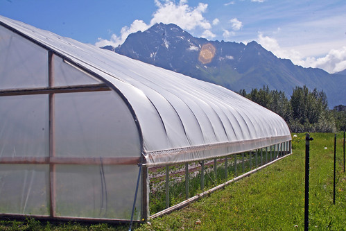 A high tunnel like this one in Alaska's Matanuska-Susitna Valley lengthen the growing season for Alaska farmers.
