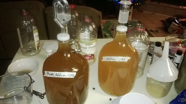 Two carboys of Apfelwein