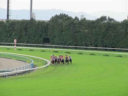 京都競馬場内回りコース
