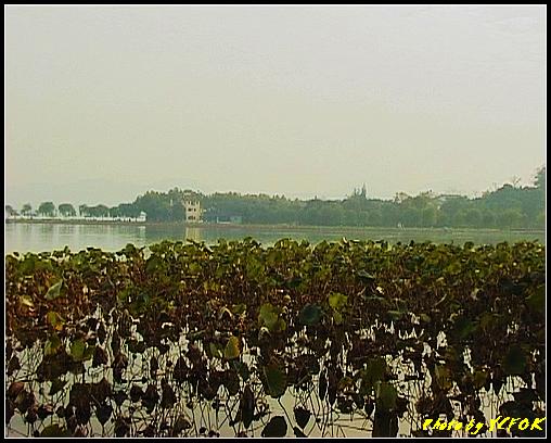 杭州 西湖 (其他景點) - 668 (從北山路湖畔望向西湖十景之 蘇堤與孤山)