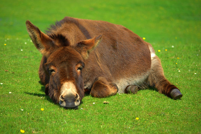 Donkey © Joe Connolly