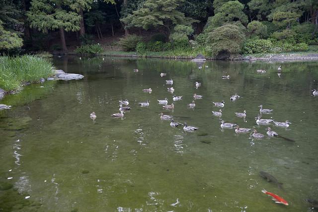 Togoshi_koen 04 戸越公園