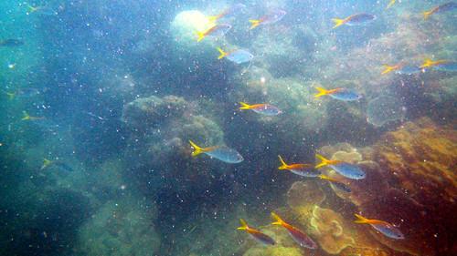 Koh Samui Matlang Snorkeling (4)
