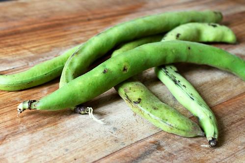 fava beans fave Saubohnen