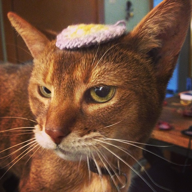 This is what having a kitty is for! Crocheting tiny things to make them wear as hats. Much to kitty's chagrin.