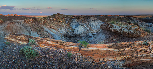Petrified Forest National Park - Logs in Blue Mesa