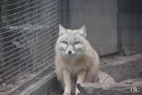 Sonntags Besuch im Zoo Berlin 25.01.2015 52