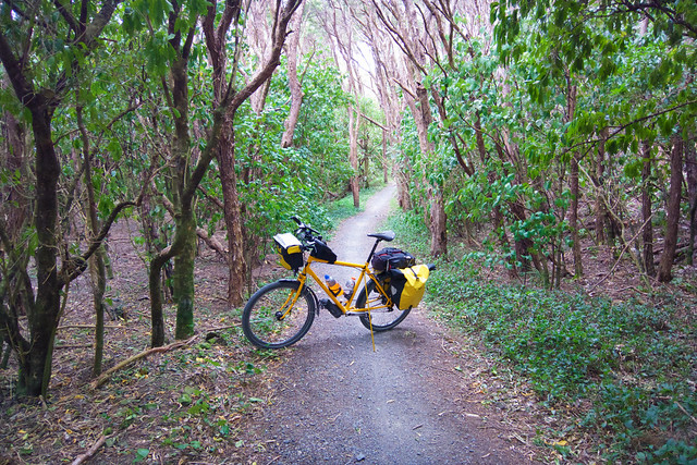Beautiful bush trail near Cross Creek Station