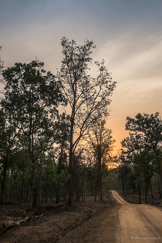 Sunrise - Pench National Park