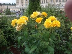 Palatul Parlamentului, iunie 2016