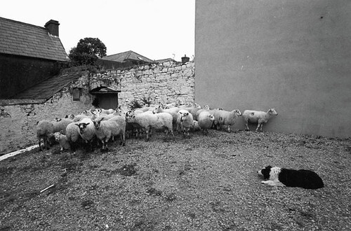 Jill Freedman, Shutting the Flock Up, 1973