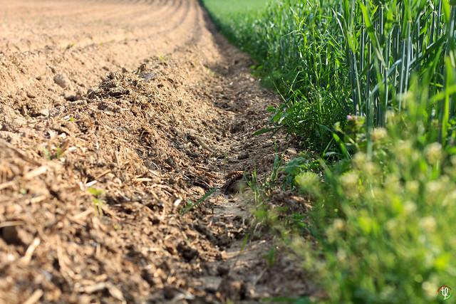 Gegensatz in der Landwirtschaft