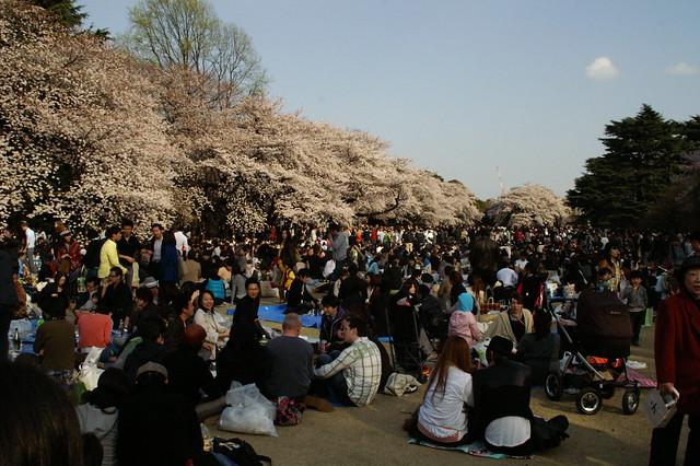 Sakura - Tokyo - Japan