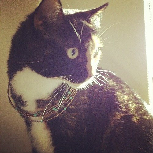 Another necklace-on-cat.  Still not impressed.