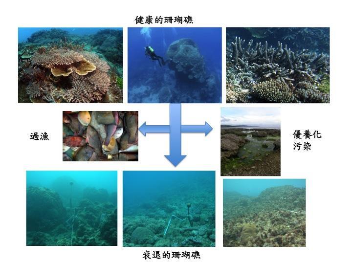 健康珊瑚礁受到過漁、海岸開發帶來的優養化污染造成珊瑚礁衰退