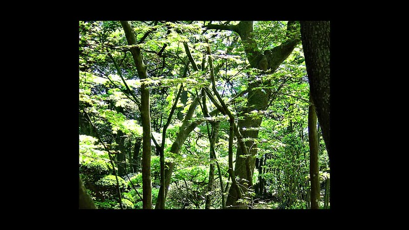 """A Walk in a Forrest"" (a slideshow with music)"