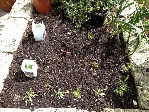 Spring gardening by margoc