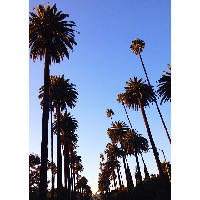 Beverly Hills has the best palm trees.