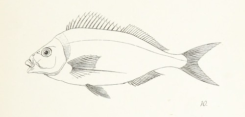 Image taken from:  Title: Fishes of New Zealand. ...