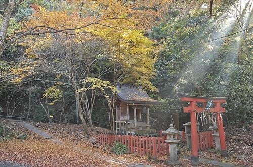 【写真】紅葉 : 若王子神社