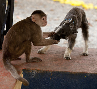 Monkey dentist and the dog 3/9