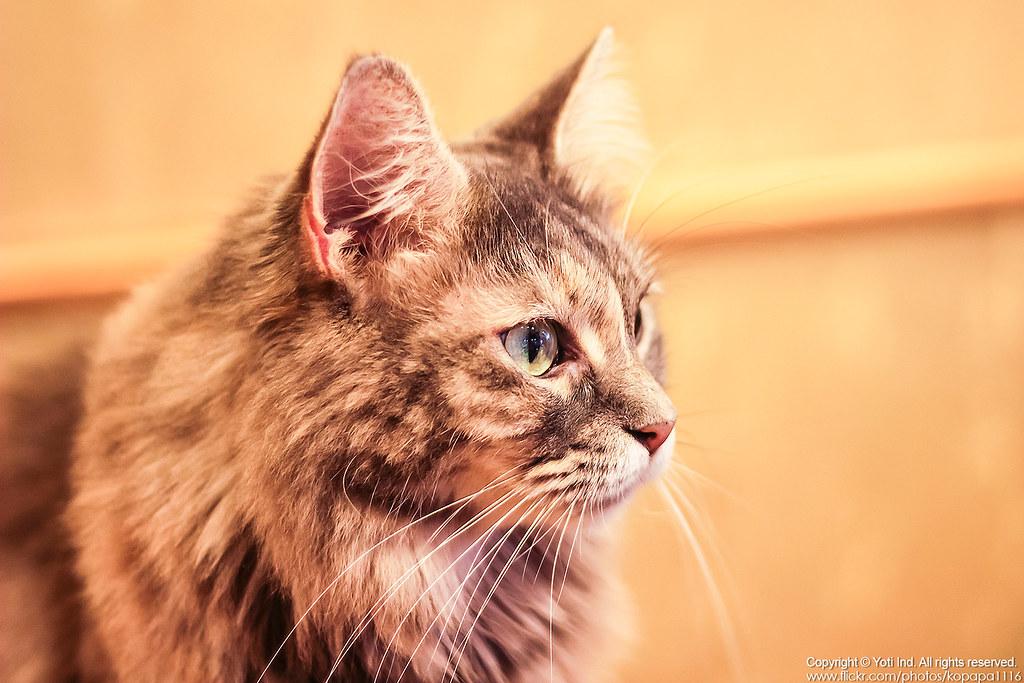 元氣貓主題餐廳 IMG_6078