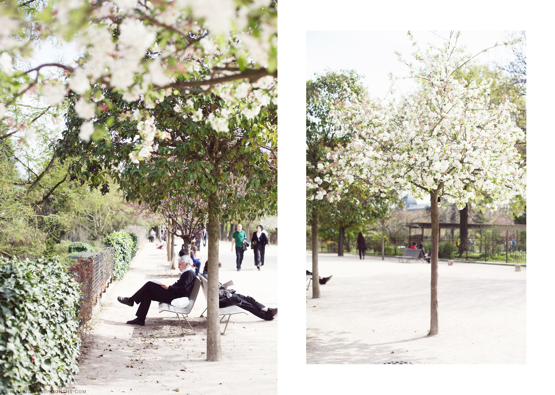 Spring in Paris by Carin Olsson (Paris in Four Months)