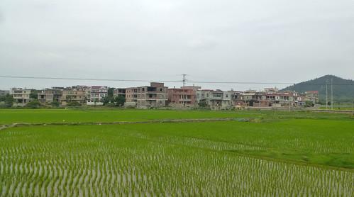 Fujian-Chongwu (116)