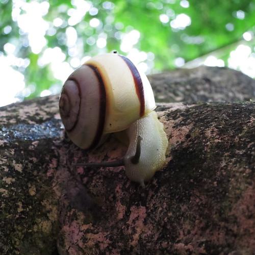 20140507_Vietnam_snails-02