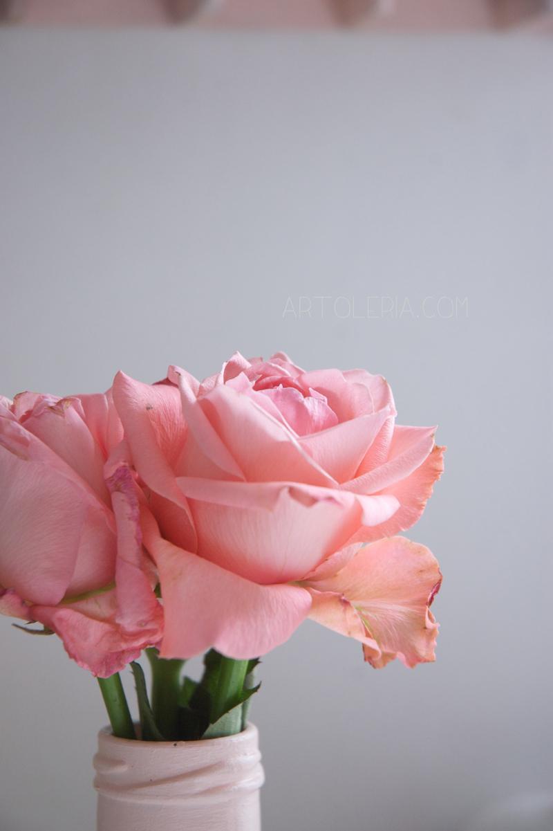 rose maggio primavera
