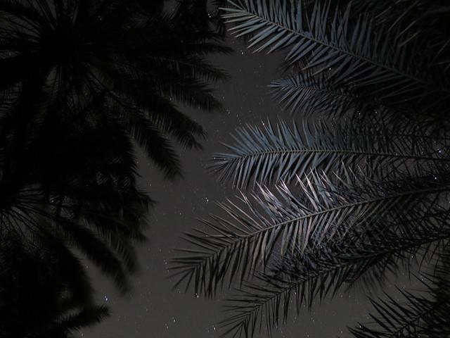 Zelten unter Palmen