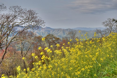 mountains landscape spring view wildflowers brp