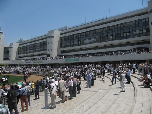 京都競馬場パドックの観覧スペース