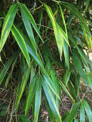 Bamboo stripes - Photo of Ménéac