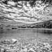 Infra-Foki by Rupert Brun