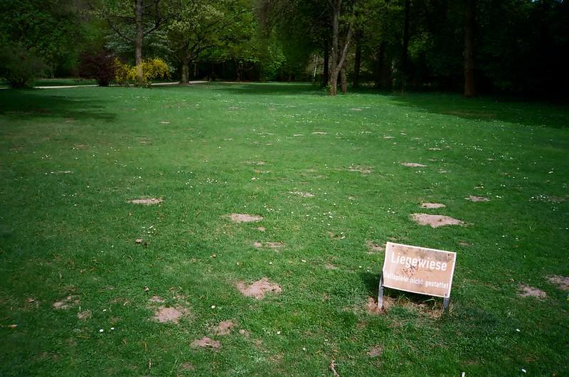 Liegewiese im Tiergarten Berlin
