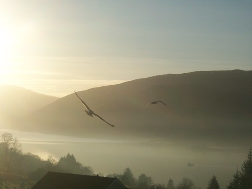 Birds in the Mist