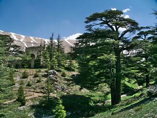 The Forest of the Cedars of God, Kadisha Valley