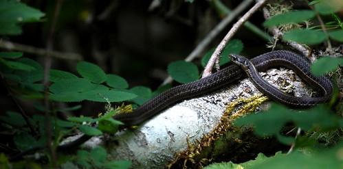 snake in the sun