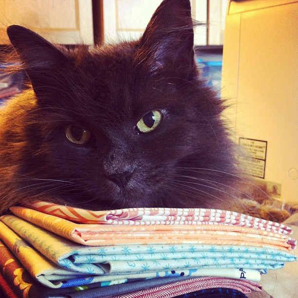 Someone approves of my most recent fabric acquisition from @moderndomestic.