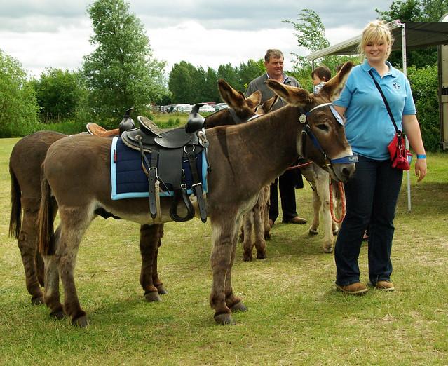 Donkey Rides!