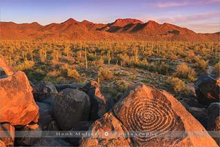 Signal Hill - Saguaro N.P - Arizona
