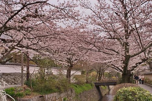 【写真】2013 桜 : 哲学の道/2018-12-24/IMGP9208