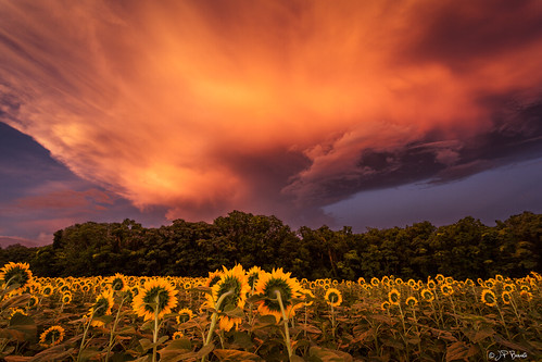 blue sunset summer orange storm green nature field leaves rain yellow clouds petals warm glow farm maryland sunflowers aura 1740l mckeebeshers photographicexperience 5dii jpbenante wallscircus