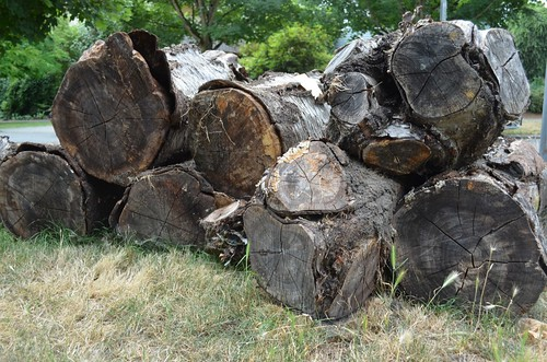 stack o' logs