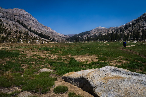 Mosquito Pass meadow