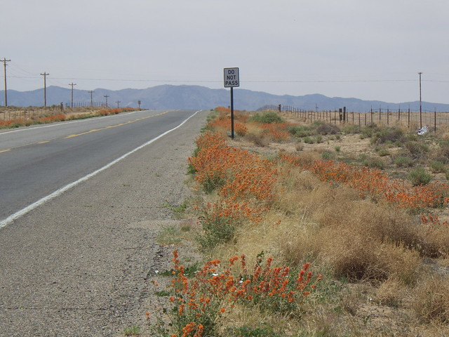 photo of roadside habitat
