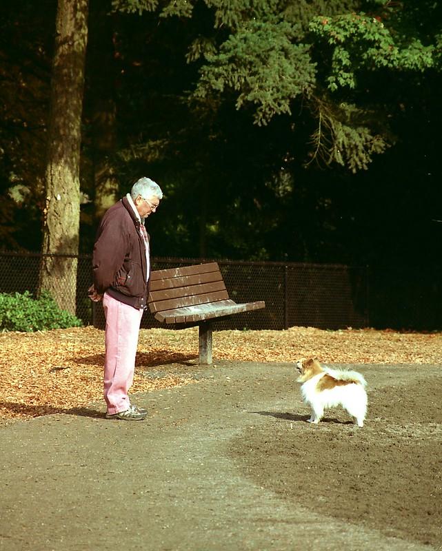 Dog Park I
